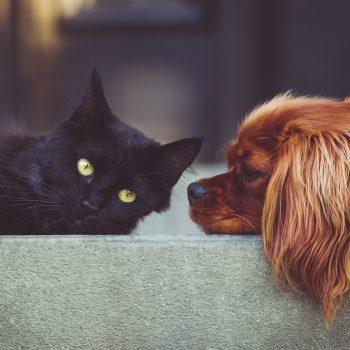 get dog urine out of carpet get cat urine out of carpet